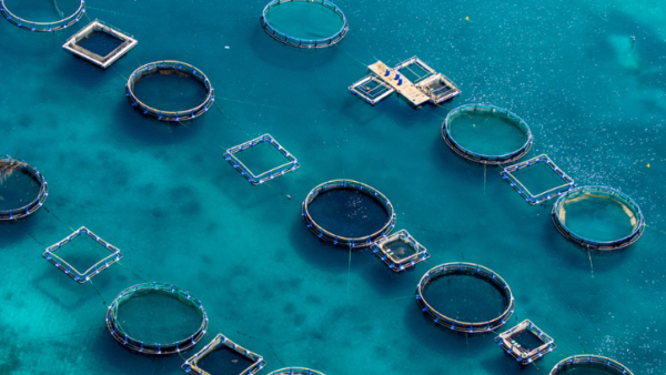 Lancement de Mer Invest : Le fonds d'investissement dédié à la croissance bleue
