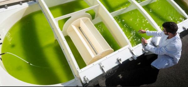 Découvrez les microalgues, une filière à fort potentiel en Pays de la Loire