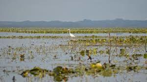 Un projet dédié à la biodiversité en Loire-Atlantique